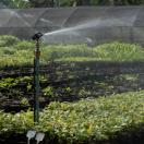Proper Irrigation for Healthy Plants