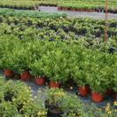 High Quality Plants at Nursery